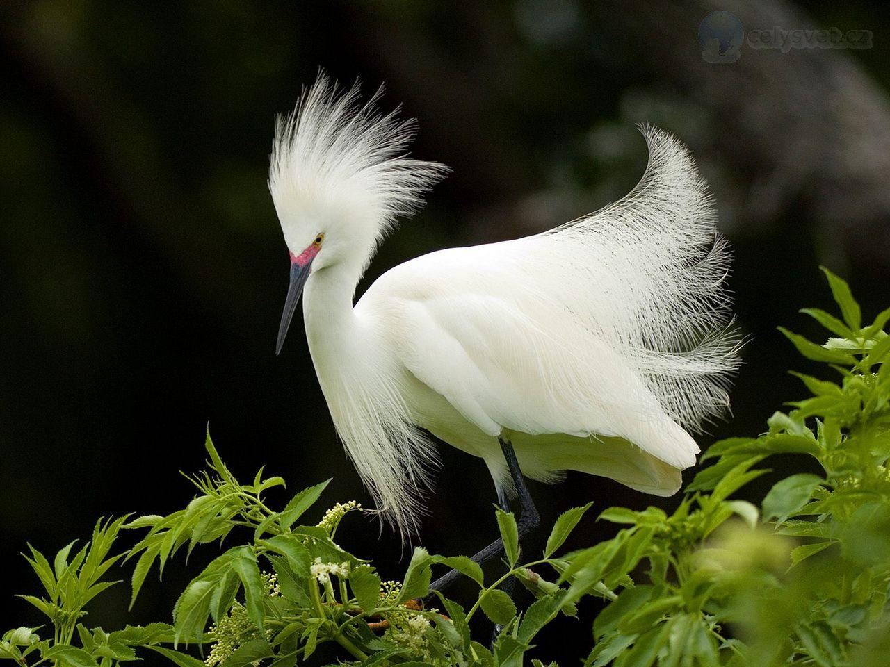 Eyre  BirdLife